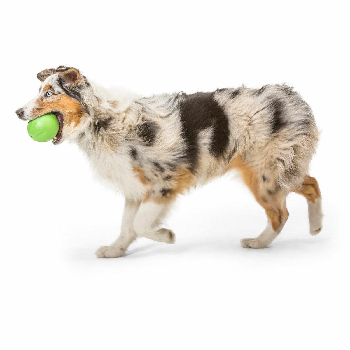 West Paw Zogoflex Echo Rando Dog Toy (Jungle Green)