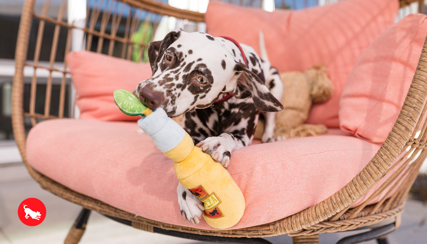 PLAY-Pet-Lifestyle-And-You-Tropical-Paradise-Toy-dog
